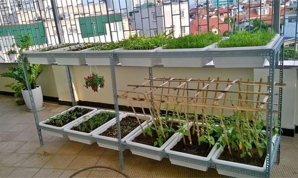 Kinh nghiệm trồng rau sạch trên sân thượng